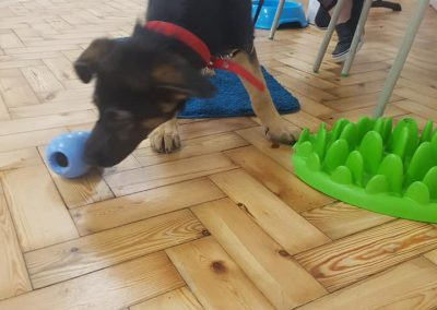 kong toy with puppy at classes in clapham battersea SW london